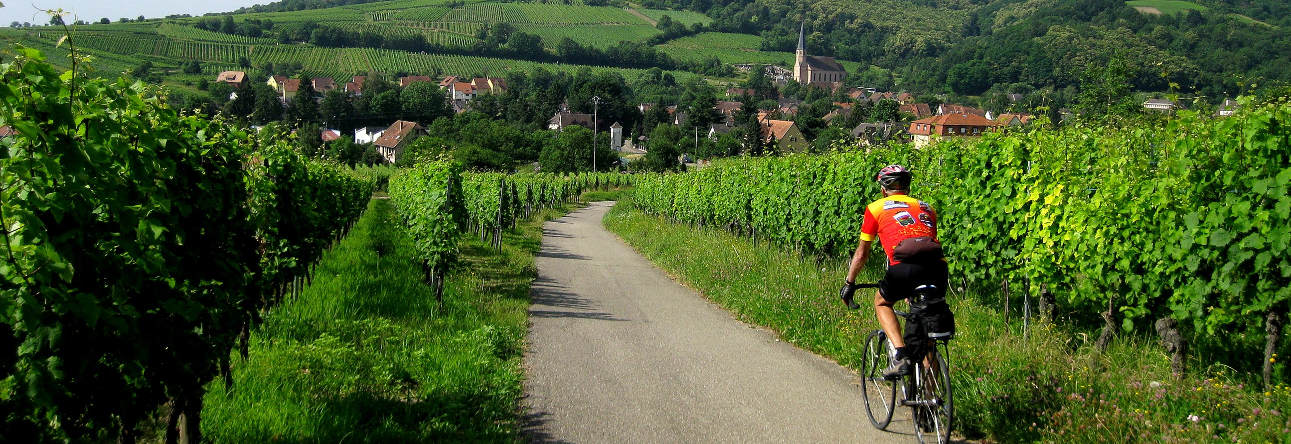 Bicycling the vineyards of Alsace in France